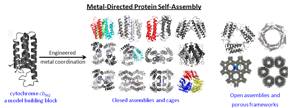 Supramolecular architectures via designed metal coordination interactions
